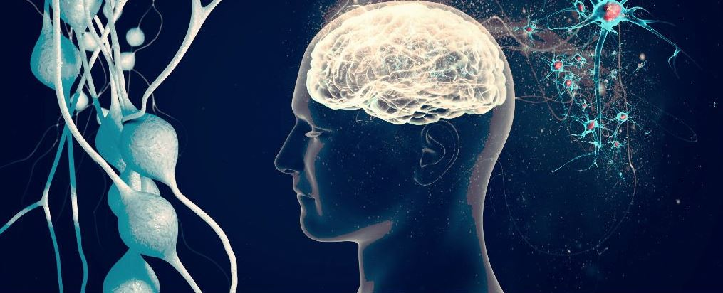 can we use 100 Percent of our Brain
